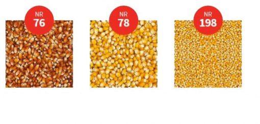 Vanrobaeys Cribbs maïs 2.5 KG