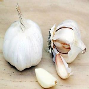 Garlic garlic Bio allicin