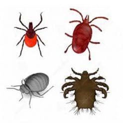 Uitwendige parasieten