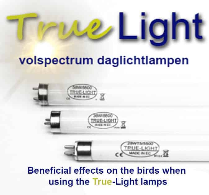 True-Light engels
