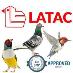 Latac Tauben